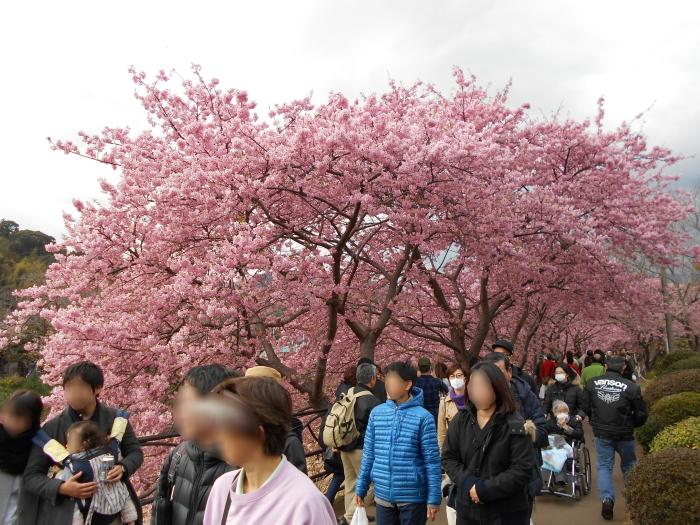 河津桜並木と人混み