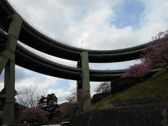 ループ橋近辺にも河津桜が・・・