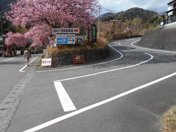 河津七滝観光センターの入口のところにも河津桜が!