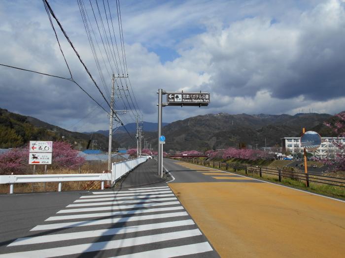 ついに河津桜が見えだした!